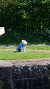 Canal dog